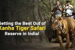 kanha tiger safari