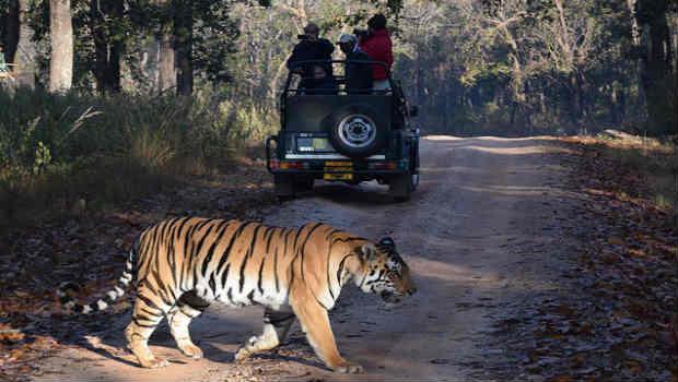 tadoba tiger safari in Andheri