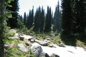 Mount Revelstoke national park