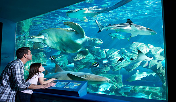 Oceanarium Bournemouth