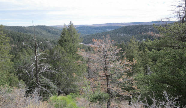 Lincoln national forest Ruidoso Mexico