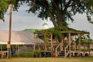 Pleasant Hill Winery in Brenham, Texas