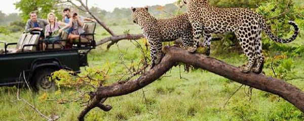 Jhalana safari tour