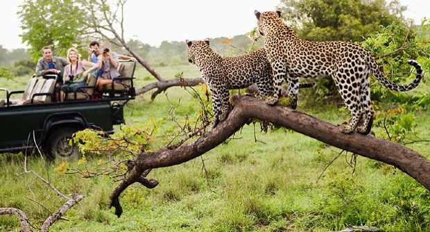 Jhalana safari tour
